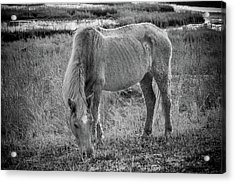 Snacking Acrylic Print by Kristopher Schoenleber