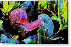 Snail 12 Acrylic Print