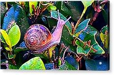 Snail 5 Acrylic Print