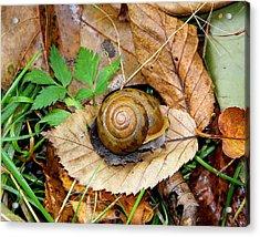 Snail Home Acrylic Print