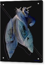 Snail Hugs Acrylic Print by Debbie May