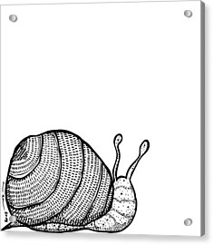 Snail Acrylic Print by Karl Addison