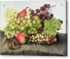 Snail With Grapes And Pears Acrylic Print by Giovanna Garzoni