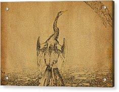Snake Bird Or Darter  Acrylic Print by Manjot Singh Sachdeva