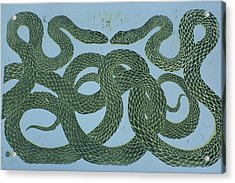 Snake Council Acrylic Print by Pati Hays