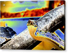 Snake Eyes Acrylic Print by Peter  McIntosh