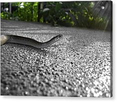 Snake In The Sun Acrylic Print