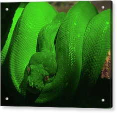 Acrylic Print featuring the photograph Snake by Jeremy Martinson