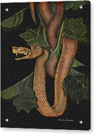 Snake Of No Kind Acrylic Print by Karen-Lee