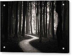 Snake Path Acrylic Print by Janek Sedlar