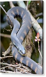 Snakes In The Trees Acrylic Print