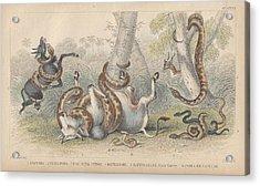 Snakes Acrylic Print