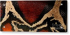 Snake's Scales Acrylic Print