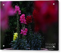 Snapdragon Acrylic Print by Greg Patzer