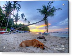 Acrylic Print featuring the photograph Snooze by Yhun Suarez