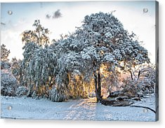 Snow At Sunrise 1 Acrylic Print by Peter Dyke