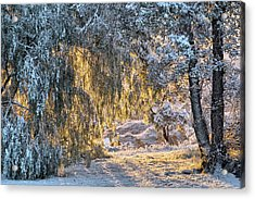 Snow At Sunrise 2 Acrylic Print
