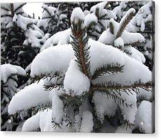 Snow Barren Acrylic Print by Ali Dover