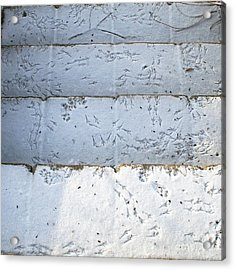 Snow Bird Tracks Acrylic Print by Karen Adams
