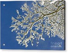 Snow Branch Acrylic Print by Tim Gainey