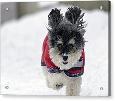 Snow Charge Acrylic Print