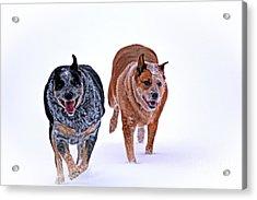 Snow Buddies Acrylic Print