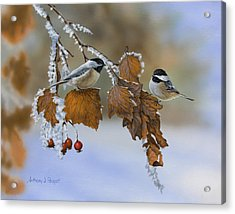 Snow Chickadees Acrylic Print
