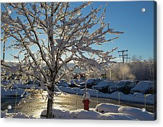 Snow-coated Tree Acrylic Print