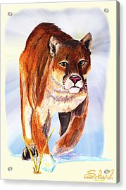 Snow Cougar Acrylic Print by Sherril Porter