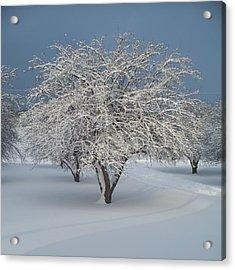 Snow-covered Apple Tree Acrylic Print by Erica Carlson