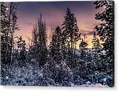 Snow Covered Pine Trees Acrylic Print