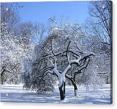 Acrylic Print featuring the photograph Snow-covered Sunlit Apple Trees by Byron Varvarigos