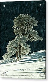 Snow Covered Tree - 9182 Acrylic Print