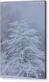 Snow Covered Tree In The Fog Acrylic Print