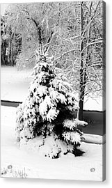Snow Covered Trees Acrylic Print by Kathleen Struckle