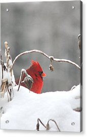 Snow Day II Acrylic Print
