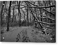 Snow Day Walk In The Woods 001 Bw Acrylic Print by Lance Vaughn