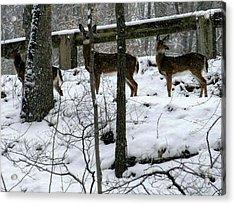 Snow Deer - Rock Creek Park Washington Dc Acrylic Print