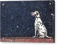 Snow Dog Acrylic Print by Yury Bashkin