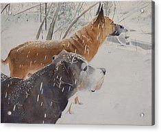 Snow Dogs Acrylic Print