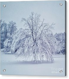 Snow Encrusted Tree Acrylic Print
