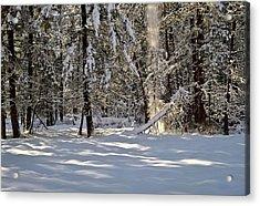 Snow Falling Off Cedars Acrylic Print