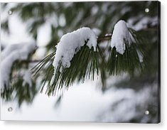 Acrylic Print featuring the photograph Snow Falling On The White Pines by Andrew Pacheco