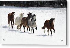 Snow Gallop Acrylic Print