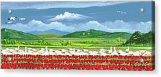 Snow Geese And Tulips Acrylic Print by Bob Patterson