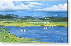 Snow Geese  Tidal Flats Acrylic Print by Bob Patterson
