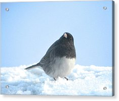 Snow Hopping #2 Acrylic Print
