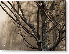 Snow In The Air - Acrylic Print