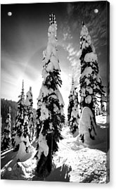 Snow Laden Tree Acrylic Print