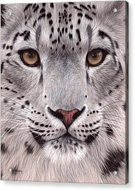 Snow Leopard Face Acrylic Print by Rachel Stribbling